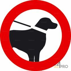 Señal prohibido a los perros incluso con correa 2